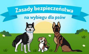 wybiegi dla psów - zasady bezpieczeństwa